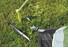 Outwell Flagstaff 6A Telt grøn